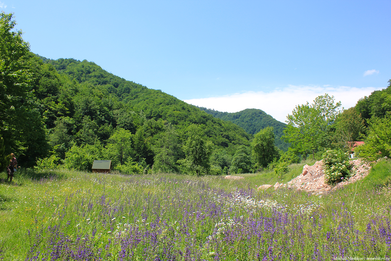 Поле в Черногории