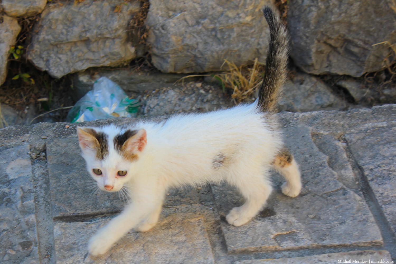 Котенок в Черногории