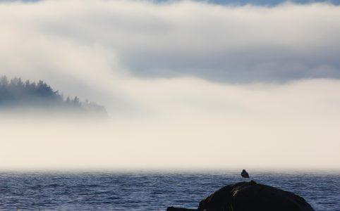 Туман на Северном Приладожье