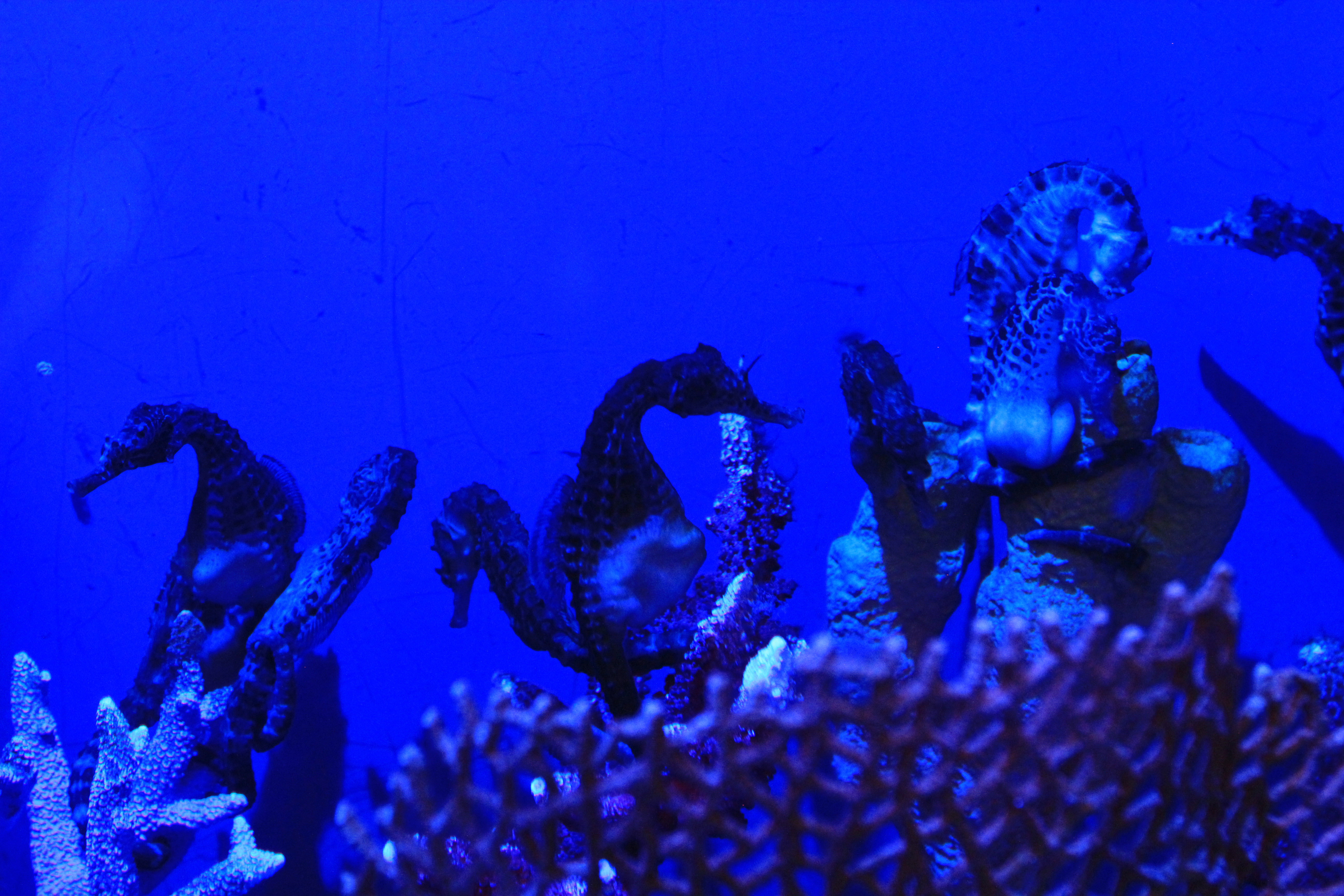 Океанариум в Дубаи